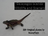 Galapagos Photos and Scenery - 220 Photos for school use