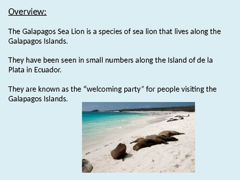 Galapagos Sea Lion - Power Point - facts information pictures