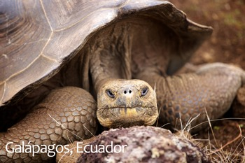 Galapagos Tortoise Poster: Digital Download
