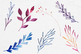 Galaxy Watercolor Plants, Floral Clipart, Botanical Images