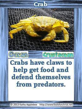 Game: Food chain adaptations card game & prompts