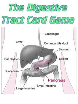 Game: The Digestive System card game