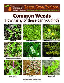 Garden Based Lesson – Weeds
