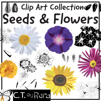 Garden Flowers and Seeds Clip Art Collection