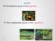 Garden Nouns