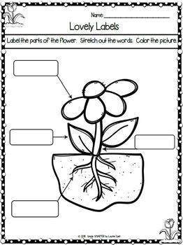 Garden Themed Kindergarten Math and Literacy Worksheets and Activities