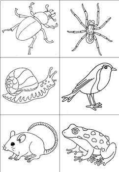 Garden creatures observation worksheet - how many legs