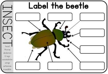 Garden creatures  worksheet - body parts labeling