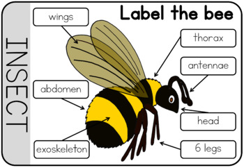garden creatures worksheet body parts labeling by little