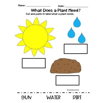 Gardening Worksheets: What Plants Need to Grow