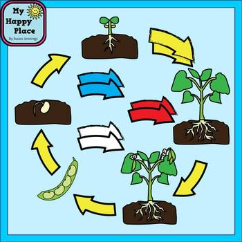 Life Cycle of a Plant Clip Art