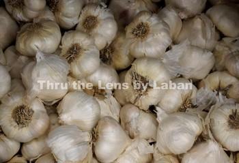 Garlic Stock Photo #62