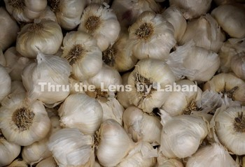 Garlic Stock Photo #62