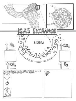 Gas Exchange Sketch Notes