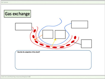 Gas exchange worksheets