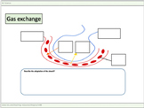 Gas exchange worksheets