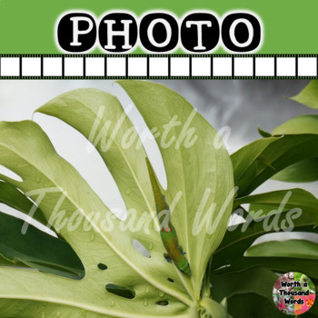 Gecko in Rainforest Photo