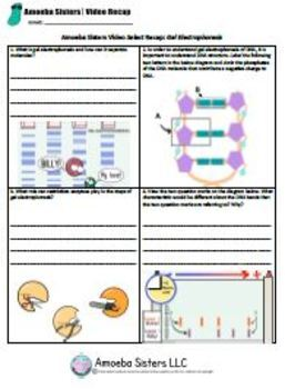 Gel Electrophoresis SELECT Recap Handout + Answer Key by Amoeba Sisters