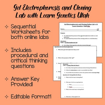 Gel Electrophoresis and Cloning Lab with Learn Genetics Utah Lab Report