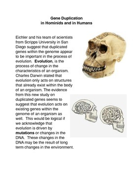 Gene Duplication in Hominids and Humans