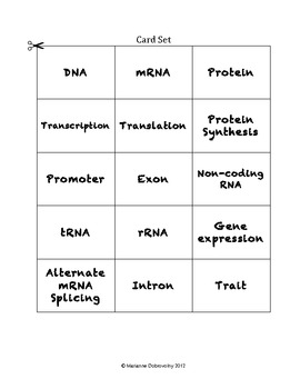 Gene Expression (Regulation)  Critical Thinking Vocabulary Connection Game