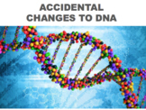 Gene Mutations and Chromosome Mutations - Changes to DNA (