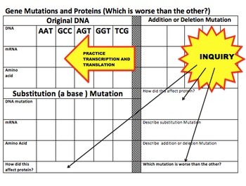 Gene Mutations and Proteins...Which Mutation is Worse?