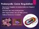 Gene Regulation: Prokaryotic (Lac Operon) and Eukaryotic R