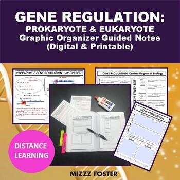 Gene Regulation: Prokayotic (Lac Operon) vs Eukaryotic Graphic Organizer