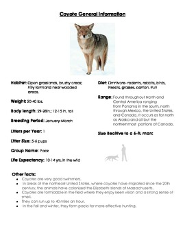 General information about the coyote