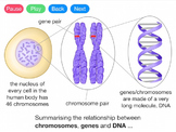 Genes, DNA and Chromosomes (Video)