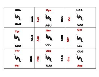 Genetic Code Puzzle