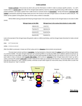 DNA Structure & Protein Synthesis 4 Version Quiz