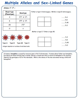Genetic Cross, Punnett Square and Identification Warm-Up Bundle