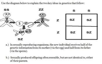 Genetic Crosses Lab Packet (3 activities)