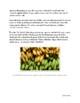 Genetics: Genetic Engineering and Bananas