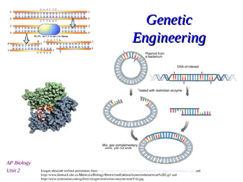 Genetic Engineering and Restriction Enzymes Introduction p