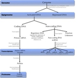Genetic Levels of Gene Expression (Detailed)