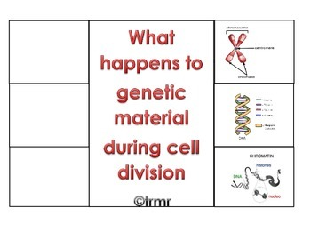 Genetic Material in Cell Division