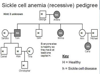 pedigree analysis of cystic fibrosis inheritance essay Human pedigree analysis problem sheet there are a number of different types of human pedigrees that you may encounter, however, there are only a few different modes of inheritance that you will need to be familiar.