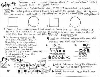 (Genetic) Pedigree coloring sheet/activity sheet