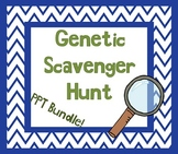 Genetic Traits Scavenger Hunt w/ Student Worksheet