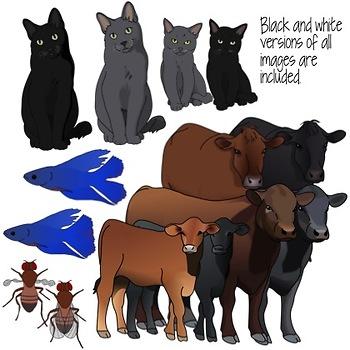 Genetic Traits in Animals Clip Art