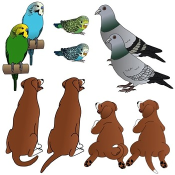 genetic traits in animals clip art by utahroots tpt