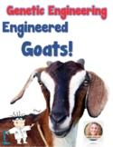 Genetics: Genetically Engineered Goats