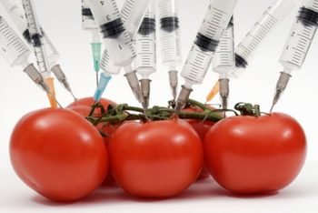 Genetically Modified Food, Panacea or Poison