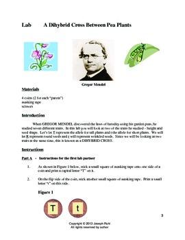 Genetics:  A Lab Simulation of Mendel's Pea Plant Crosses