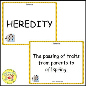 Genetics Biology Vocabulary Cards