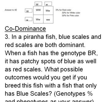 Genetics Bundle -- Terminology, Punnet Squares, Mendel, Co+Incomplete Dominance