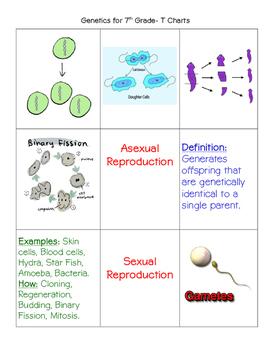 Genetics Card Sort-7th Grade